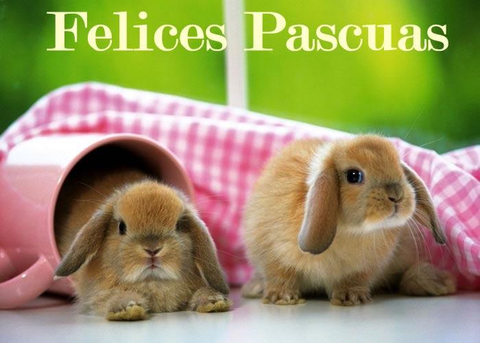 conejos-felices-pascuas